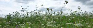 Biozertifizierte Kräuter-Wildsammlung in Kroatien